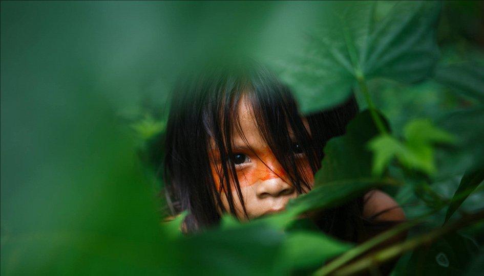Выставки: Amazonas