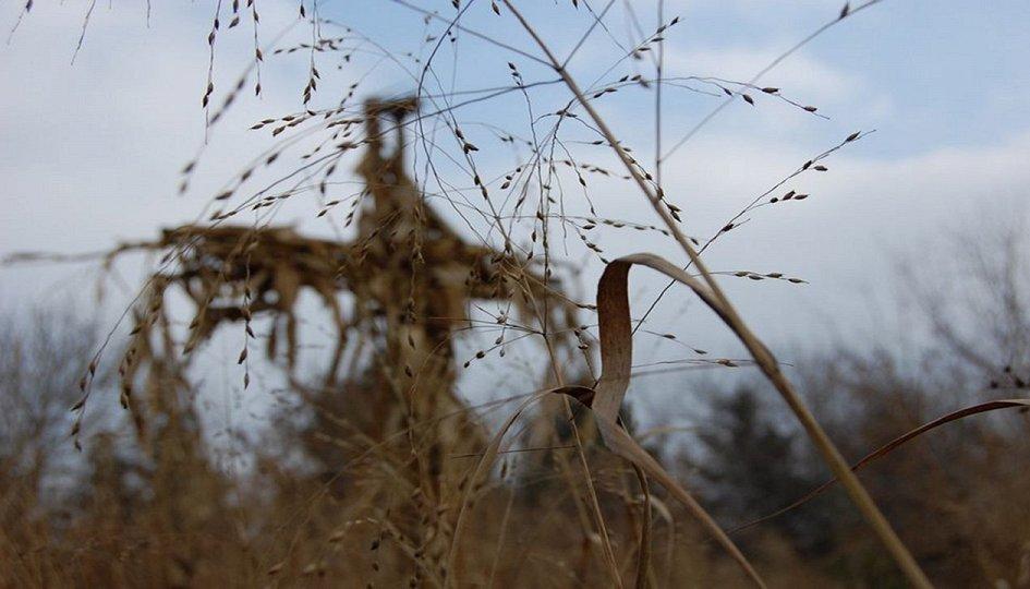 Кино: «Дети кукурузы-4»