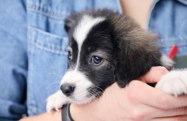 Налог насодержание домашних животных могут ввести наУкраине