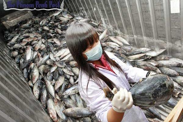 ВФукусиме выловили зараженную радиацией рыбу