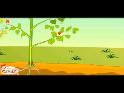 Photosynthesis - Фотоапарати дигитални и DSLR