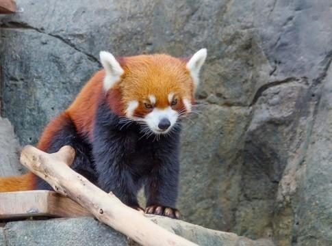 Московский зоопарк показал, как животные резвятся в метель — Рамблер/новости