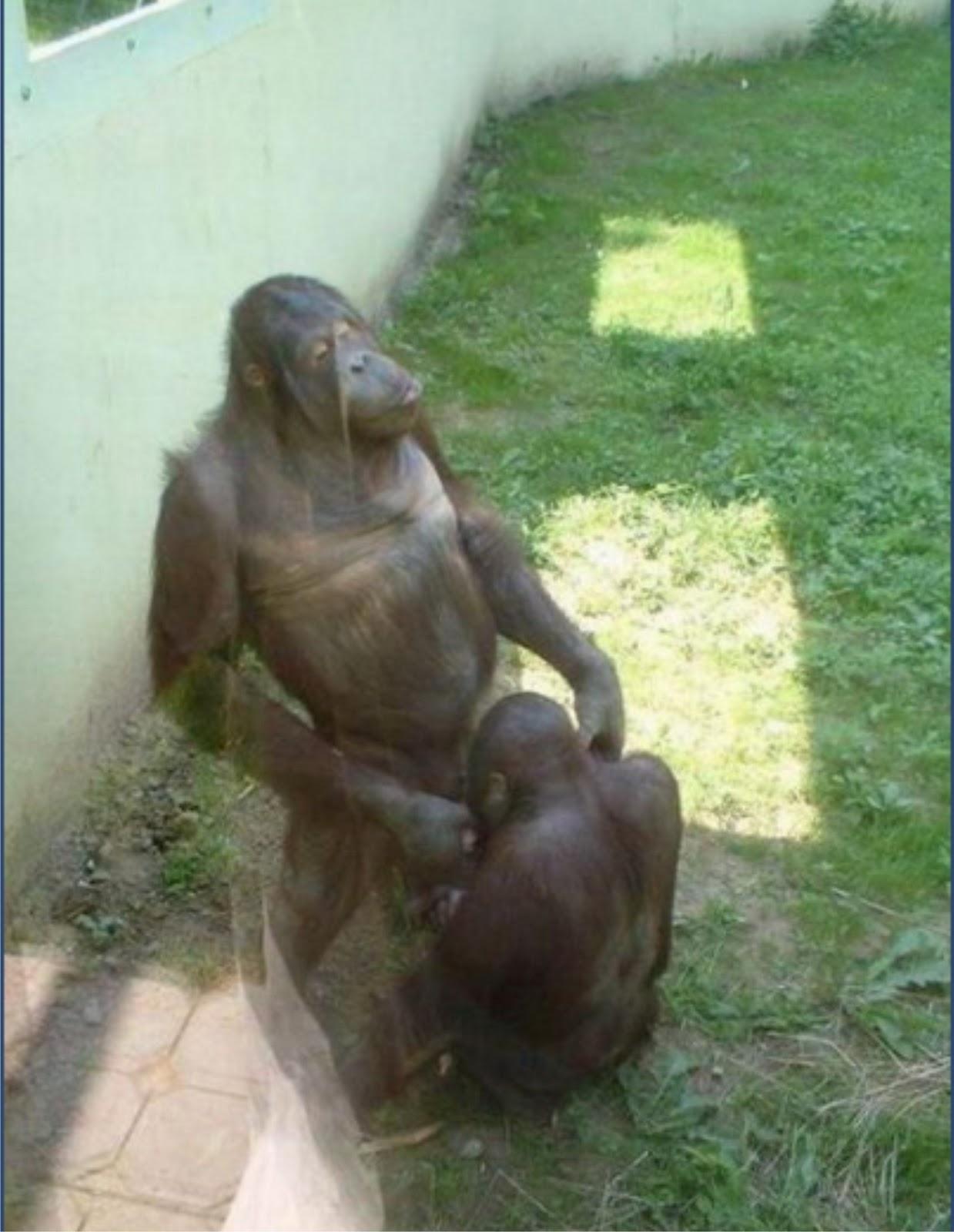 Секс с обезяной ru