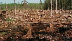 ВРФзапланировали повышение экосборов