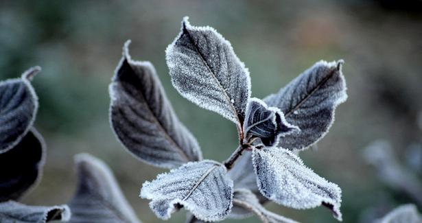 МЧСпредупреждает озаморозках вЛенинградской области