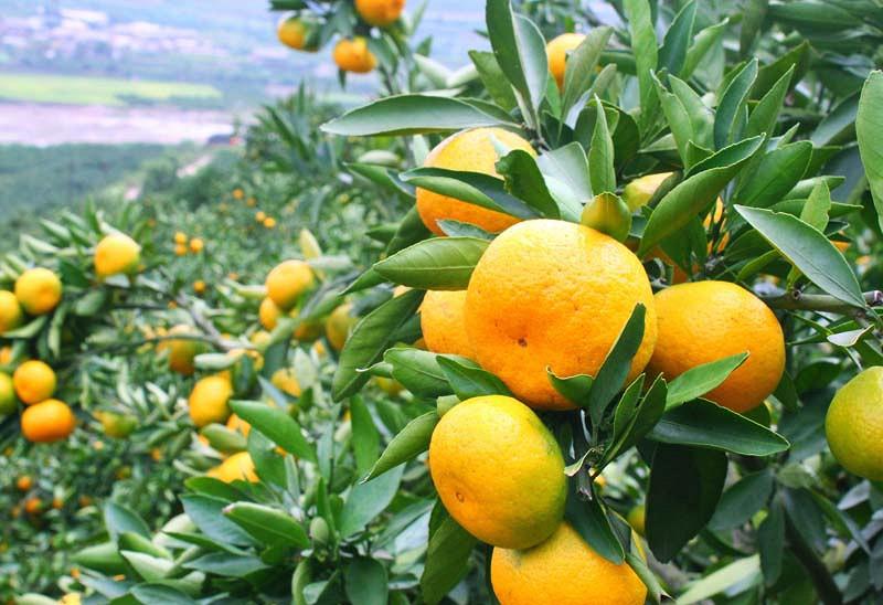 Tangerine controversy login australia