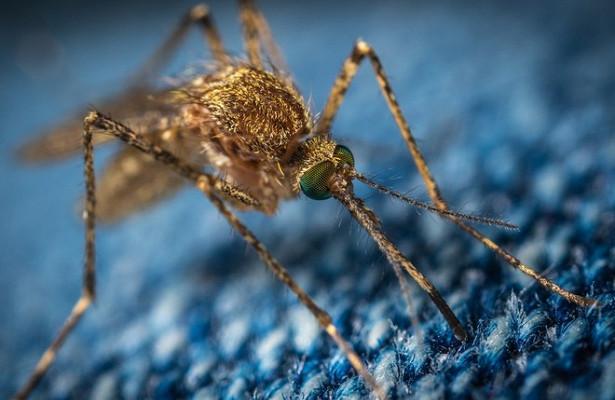 Обыкновенные комары появились вАнтарктиде