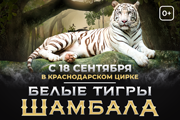 Шоу белых тигров «Шамбала»
